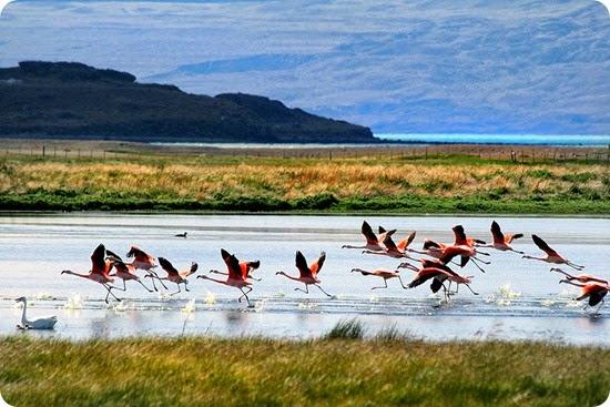 Lago_Argentino,_Patagonia,_Argentina