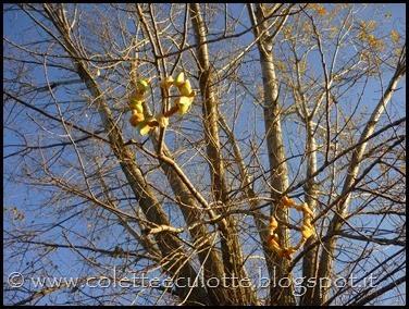 Ghiotte-leccornie-per-gli-uccellini-[77]