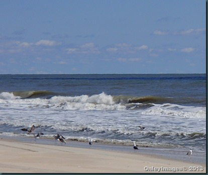 seagulls in surf 2