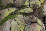 Seal Colony - Cape Foulwind, New Zealand