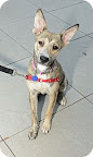 Bonnie... waiting to be adopted at The Humane Society of New York.  See link at end of blog post for more details.