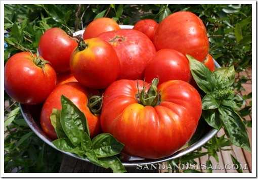heirloom tomatoes, organic gardening