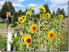 Missoula MT flowers 008 with added sunflowers