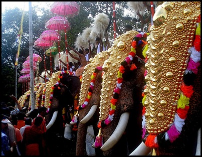 Thrissur PooramElephants II