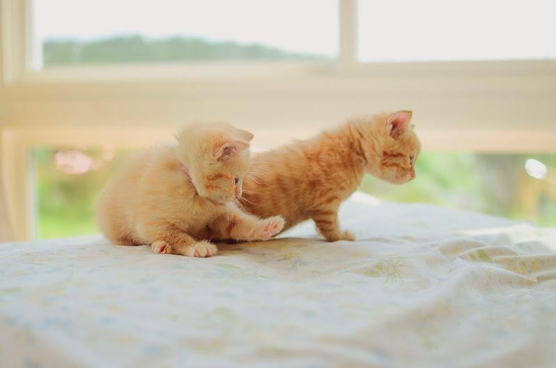 may kittens-19443