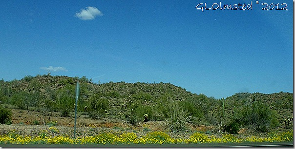 02 Flowering brittlebush along SR74 E AZ (1024x515)