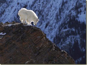 goat cliff