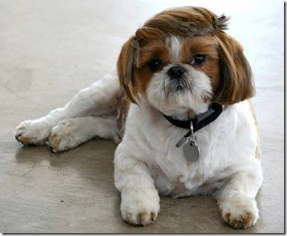 Animal cãoengraçado (8)