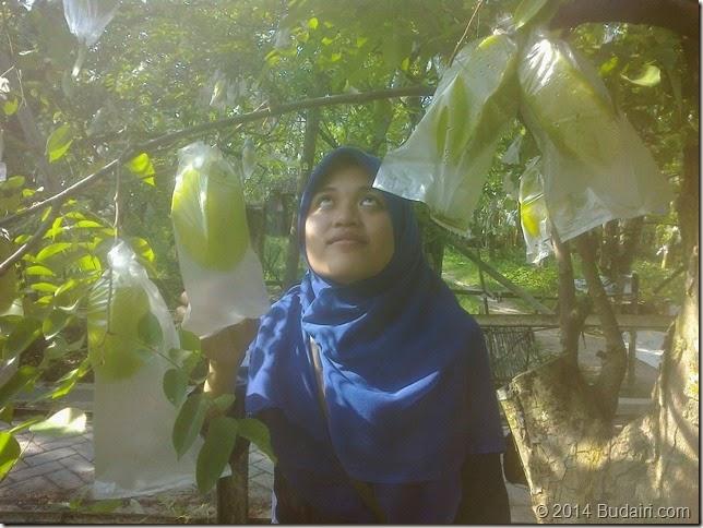 Agrobisnis Kebun Blimbing Bojonegoro 2