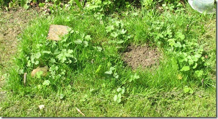 20120512 Lawn rectangle