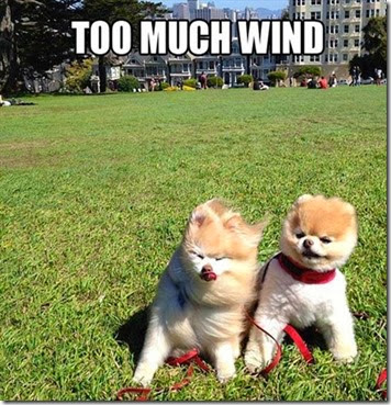 wind puppies