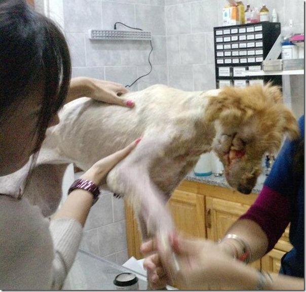 História incrível do salvamento de um cão (14)