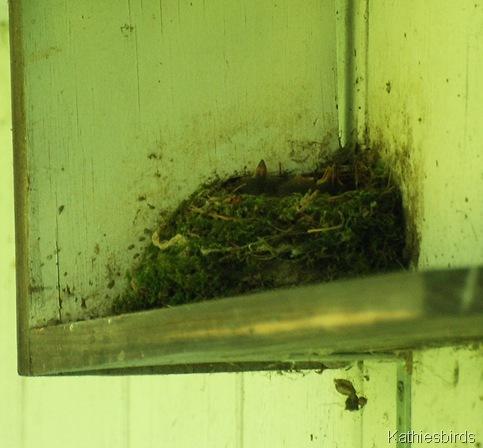 3. nestlings-kab