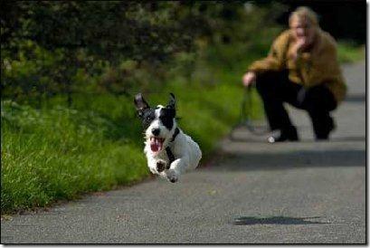 perros divertidos (6)