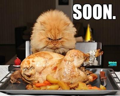 Soon thanksgiving cat