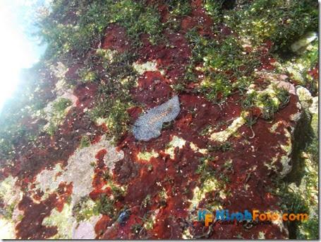 karang pantai watu kodok_03
