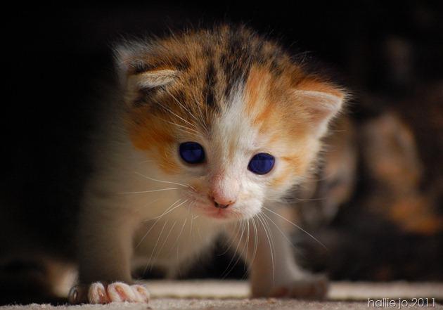 Kitty13