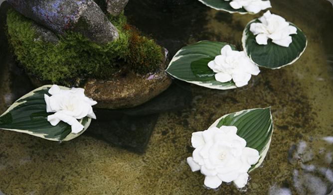 floaters opalia flowers4