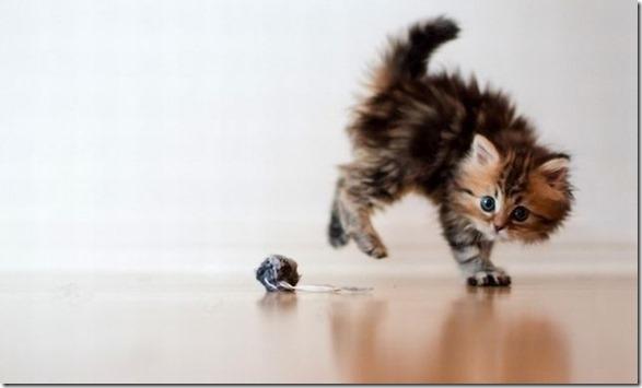 funny-animals-cute-3