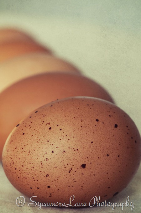 Egg-w-sycamorelane photography