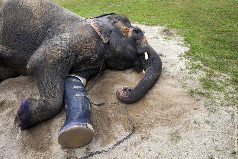 elephant-hospital-11