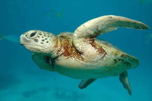 Great_Barrier_Reef_Cairns_Australia.img_assist_custom-600x400