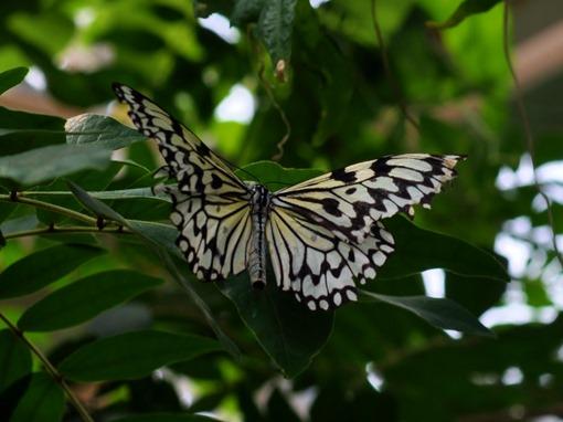 2013-07-05 butterfly pavilion (75)