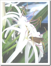 Florida vacation 3.12 white petaled flower with bug
