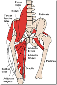 Anterior_Hip_Muscles.jpg