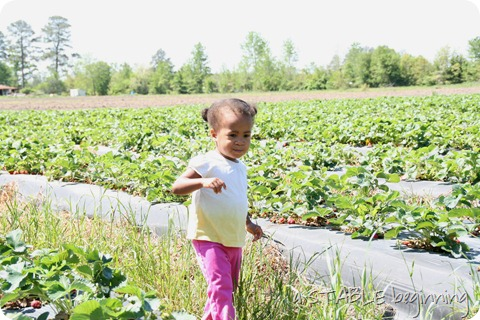 Strawberry picking 006