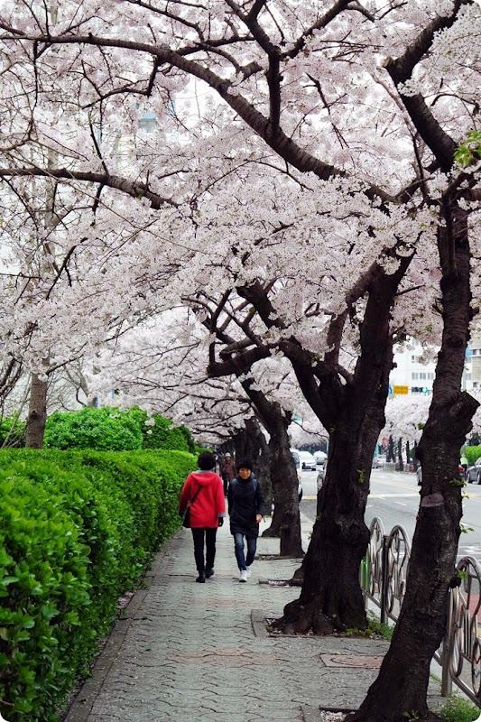 Japan April 2015 025