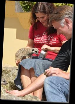 Feeding Meerkats DSC_0621