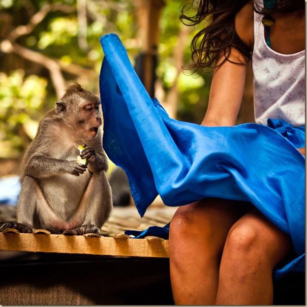 The monkey who saw too much, Pura Luhur Uluwatu - Bali
