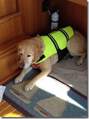 Joey in life jacket