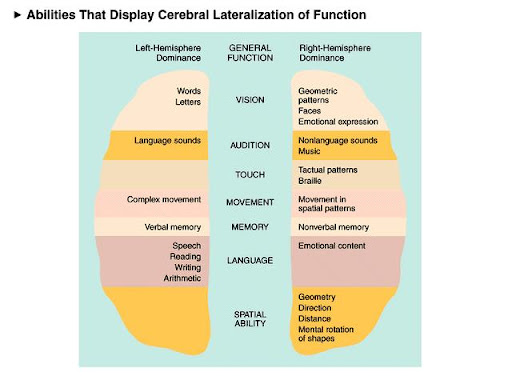 psy 240 week 8 cerebral lateralization and functionality Psy 240 homework learn by doing- psy240homeworkcom - free download as powerpoint presentation (ppt / pptx), pdf file (pdf).
