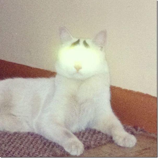 white-cat-eyebrows-13