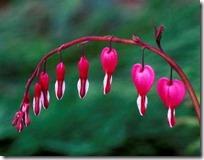 san valentin (1)