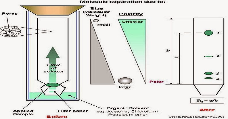 chromatography-paper