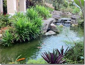 pandan plants at koi pond Rasa Sentosa Resort Singapore