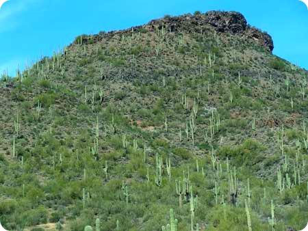 8-cactus-area
