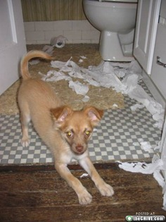 Рулона туалетной бумаги как не бывало