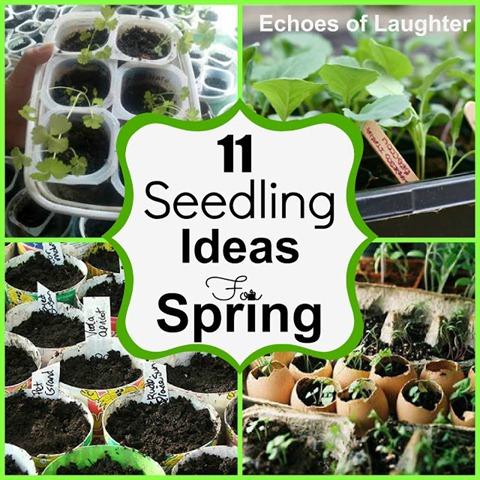 Seedling Collage