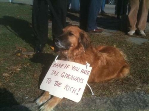 cute-pets-at-occupy-wall-street-24