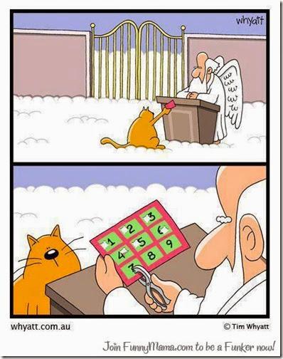9 vidas del gato
