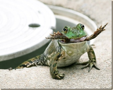 frog-eat-frog_1823514i