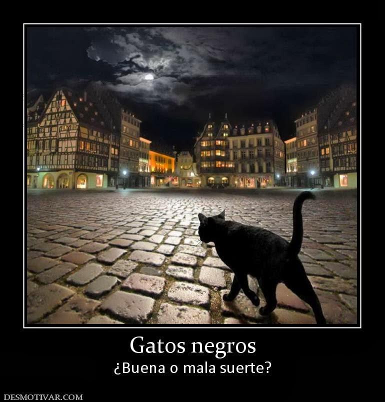 Abracadabra el gato negro buena o mala suerte - Como eliminar la mala suerte ...