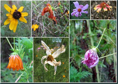 wildflowers collage927