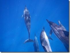 ハワイ島 ドルフィン