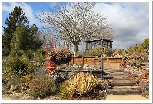 120211_UCSC_Arboretum_237