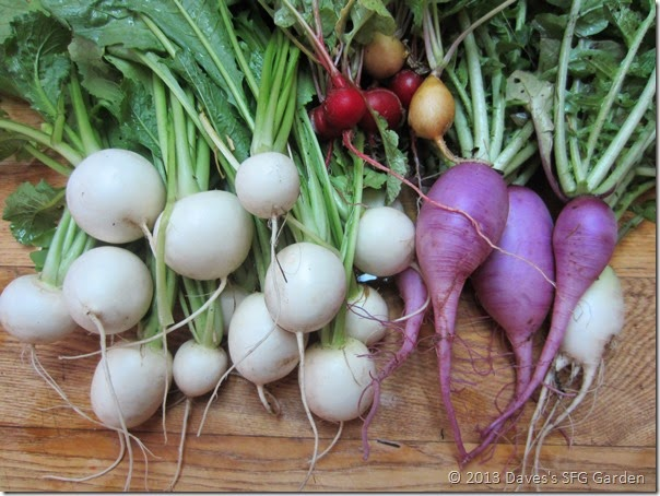 turnips&radishes
